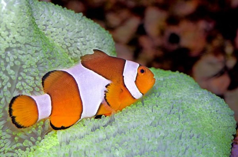 Výsledok vyhľadávania obrázkov pre dopyt kudy z nudy Zoo Morský svet