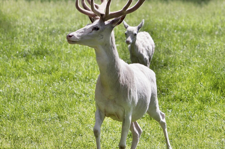 Obora leby - bl jeleni a dravci - Kudy z nudy