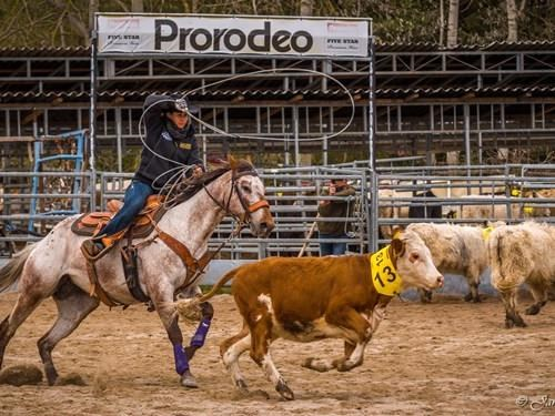 ProRodeo Tour 2020