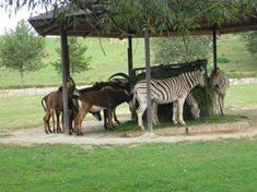 Pravé africké Safari v Česku