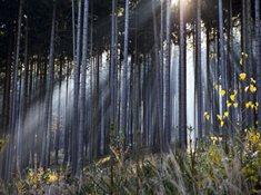 Bohutínský vrch - jedna z brdských osmistovek