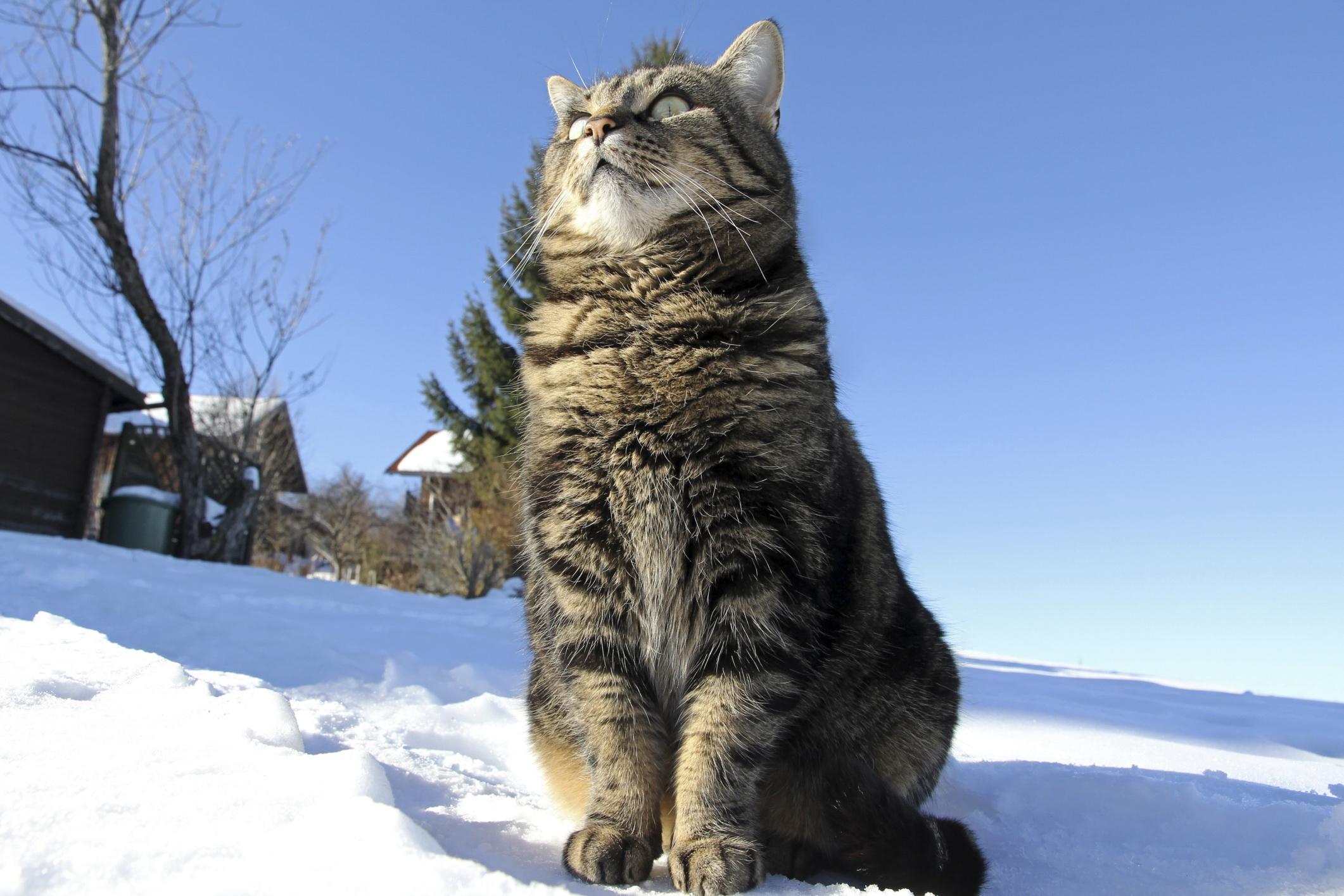mladá těsná latina kočička