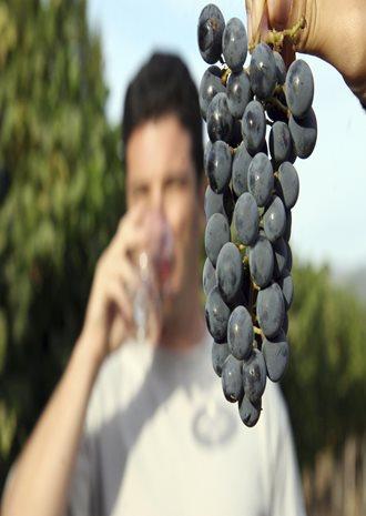 Mutěnické vinařské dny 2015