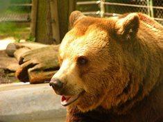 Do Berouna za medvědy z Večerníčku