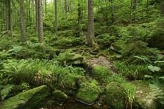 Přírodní park Jelení vrch