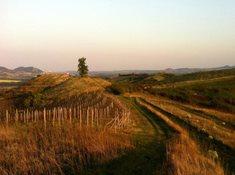 Národní přírodní památka Dunajovické kopce - pomalu ztracený svět