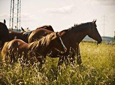 Barefoot ranč Líšnice