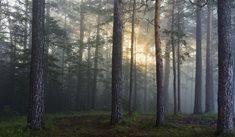 Tajemný les Bor u Českých Budějovic - místo paranormálních jevů