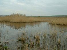 Přírodní rezervace Louky pod Kumstátem