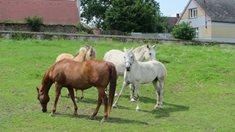 Koně pro malé i velké na Ranchi NN