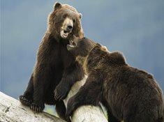 Městské medvědárium Kladno