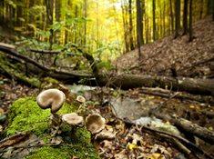 Přírodní park Ždánický les