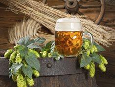 Křinický pivovar v Krásné Lípě
