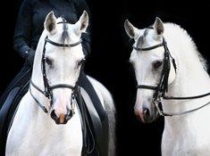 Rovinou ke koním i bílým jelenům