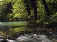 Přírodní rezervace Údolí Únětického potoka a Roztocký háj - Tiché údolí