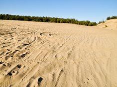 Váté písky u Bzence - Moravská Sahara