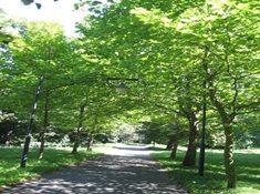 Anglický park na Ostrově v Nymburku