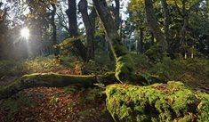 Národní přírodní rezervace Žofínský prales