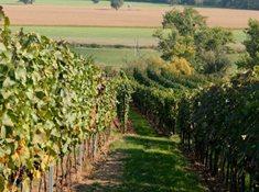 Vinařství Tomanovi v Moravské Nové Vsi