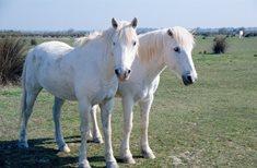 Muzeum starokladrubského koně ve Slatiňanech