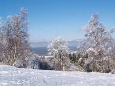 Vrchol Zvičina - nejkrásnější pohled na Krkonoše