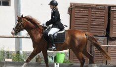 Dvůr Svržno – jezdectví či pobyty u koní