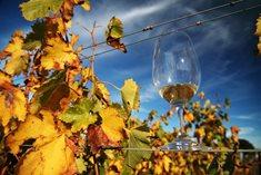 Rodinné vinařství U Samsonů - vína tradičních odrůd
