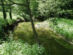 Třebovka - řeka s nevyzpytatelnou tváří
