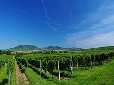 Vinařství Zámečník v Dolních Dunajovicích - ochutnejte víno s vinařem
