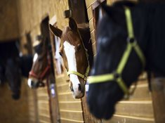 Jízdy na koních v jezdeckém klubu Harfa Ohrobec