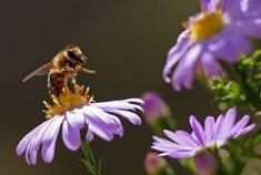 Včelí naučná stezka hraběte Harracha