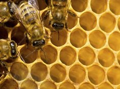 Včelí naučná stezka v Ostrožské Nové Vsi